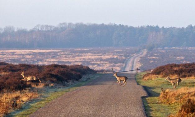 Een ontspannende vakantie in de Nederlandse natuur