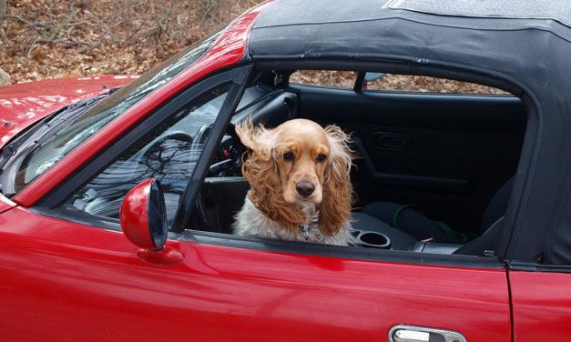 Op reis met je huisdier