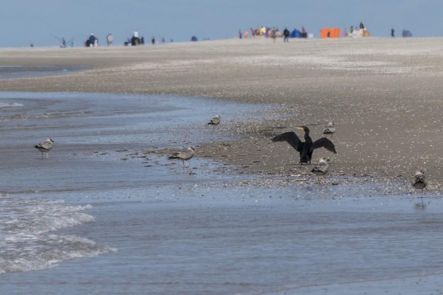 Nederland Texel strand