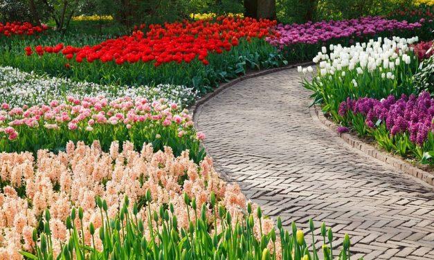 Ontdek de mooiste tuinen van Nederland met deze tuinenroutes