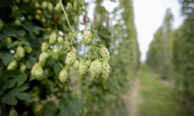 48 uur genieten van Belgisch bier in Oost-Vlaanderen
