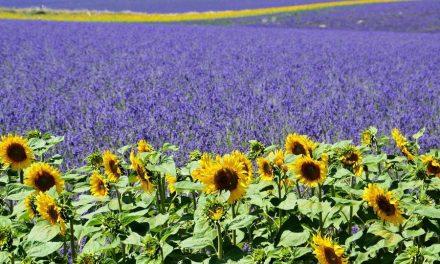 Warm, zonnig en niet te ver weg: de Provence